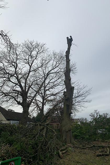 Tree surgeon Welwyn Garden City